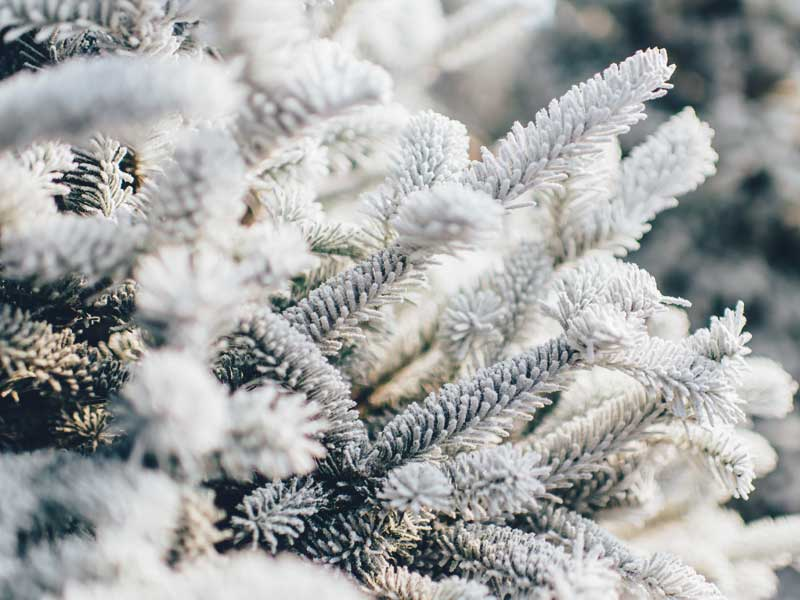 Frost pa gran